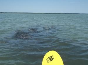 giant floating net